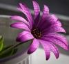 Цветок обычный